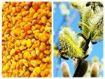 polen de salcie